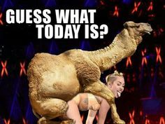 GUESS WHAT DAY IT IS?! HUMP DAY! Wednesday Camel humps Miley Cyrus