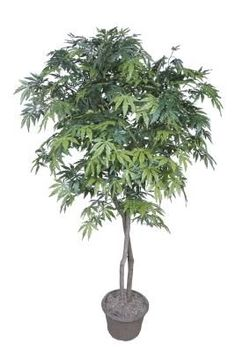 What Kind Of Small Trees Are Good For Planting In A Large Flower Pot?