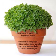 Fernando Pessoa   Quadras ao Gosto Popular Planter Pots, Herbs, Popular, Writers, Portugal, Thoughts, Fernando Pessoa, Tips, Poems