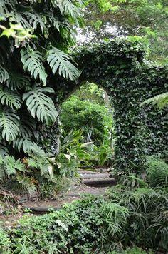 Garden and Home Tropical Design, Home And Garden, Gardens, Gallery, Plants, Garden, Roof Rack, Outdoor Gardens, Plant