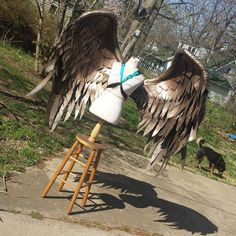 Large Hawkgirl Injustice cosplay wings.  Neck and shoulder harness. Mainly PVC and foam construction.  Animal friendly: all feathers are hand cut