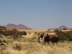Desert Rhino Camp | Signature African Safaris