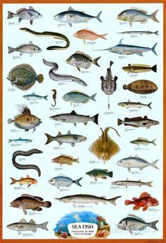 Pesci di mare, in inglese, francese e italiano Poster