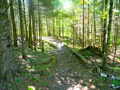 Superior Hiking Trail - Castle Danger to Gooseberry Falls