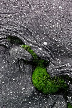 """...moss growing out of lava rock // Thriving In the Midst Of Adversity! As foretold in the Bible, we are living in """"critical times hard to deal with."""" (2 Tim.3:1) Family turmoil, health problems, financial stresses are just some of the obstacles that may afflict you. Bible Education in > 700+ languages >> Free www.jw.org >> Something for everyone!"""