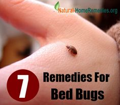 remedies for bed bugs
