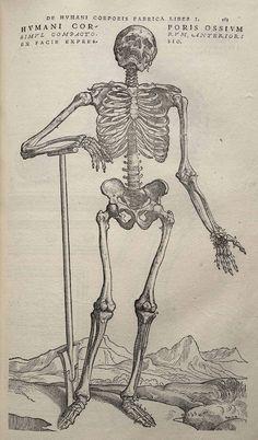 An illustration of a skeleton from Vesalius's <em>De humani corporis fabrica</em>.