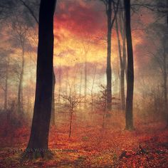 world on fire  Prints: http://society6.com/DirkWuestenhagenImagery/world-on-fire-E9t_Print