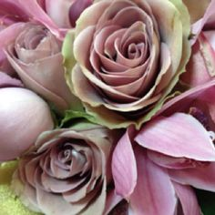 Amnesia Roses and pink cymbidium orchids! Beautiful combo for a bouquet Pink Green Wedding, Plum Wedding, Pink And Green, Wedding Flowers, Green Weddings, Dream Wedding, Blush Roses, Red Roses, Amnesia Rose