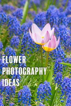 Spring Flower Photography Ideas Photography Gear, Flower Photography, Landscape Photography, Simple Flowers, Pretty Flowers, Spring Flowers, Cherry Blossom Tree, Blossom Trees, Watery Eyes