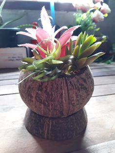 DIY pot of coconut shell natural color Small Size for Garden Flower Bonsai #Unbranded