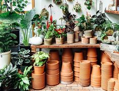 love the peg board with plants hanging on it