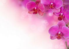 Hintergrundbilder Blumen 746dk | Hintergrundbilder HD