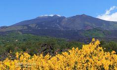 Vulkan Ätna Südseite mit blühender Ginster http://www.sizilien-etna.de/2015/07/vulkan-aetna.html