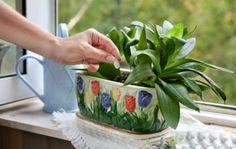 1 чайную ложку сахара равномерно насыпают на поверхность земли перед поливом, или разводят 2 чайные ложки сахара на стакан воды. Такую подкормку проводят раз в месяц до тех пор, пока растения окончательно не окрепнут и не приобретут здоровый вид.