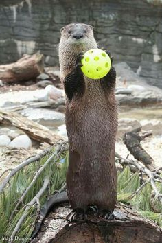 Strike 3 he's otter out!!!