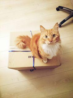 Un Cookeo ? Mais… Kezako ? Mrou Photo Chat, Illustrations, Lol, Cats, Photos, Animals, Gatos, Pictures, Animales
