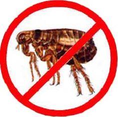 For Flea Control Service visit http://termitesvic.com.au/fleas/