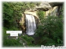 Bear8.com - Home of the Babbling Brook and Falling Water Cottages in Transylvania County, North Carolina.