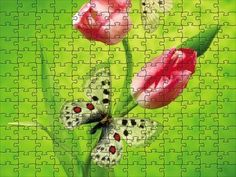Tulips & butterfly - jigsaw puzzle - 63 pieces Free Online Jigsaw Puzzles, Tulips, Butterfly, Wallpaper, Flowers, Wallpapers, Bowties, Royal Icing Flowers, Flower