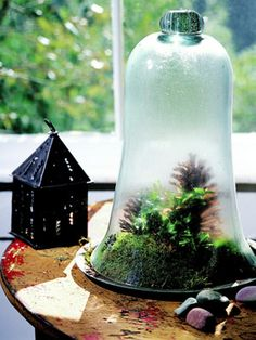 This winter, cultivate a little bit of green in a picture-perfect terrarium.