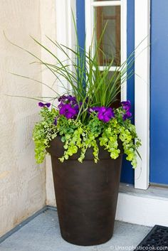 Planting a Perfectly Proportioned Garden Vase -- three easy steps to planting a garden vase that will be a beautiful focal point for your front porch or deck! Shown with Dracaena, beautiful deep purple Petunias & Lysimachia... | unsophisticook.com