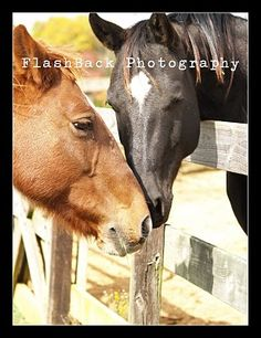 Love...These two horses were on opposite sides of the fences, but they were inseparable. It was the sweetest thing. Animal <3.