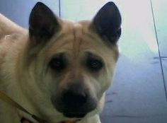 Luna Loscertales #veterinario www.veterinario.es