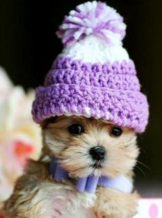 Cutest Puppy in Purple Winter Hat           IT IS SAD WHEN YOU WANT YOUR PUPPY TO LOOK LIKE THIS....