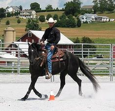 Slow Your Speedy Horse Down – Part I I have a couple horses I'm going to try this on.