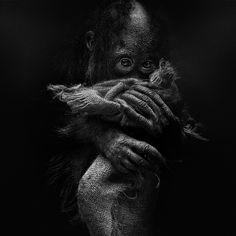 Baby Orangoutang by LJ