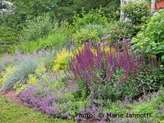 Because there are so many yellow and purple flowers to choose from, the hard part about using these colors is editing how many plants you have.