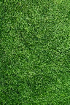 Grass Field Top View by AlexZaitsev on Creative Market - Textures ! - Grass Field Top View by AlexZaitsev on Creative Market - Grass Texture Seamless, Grass Photoshop, Grass Drawing, Grass Alternative, Grass Edging, Grass Carpet, Grass Pattern, Growing Grass, Cat Grass