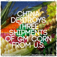 China destroys three shipments of GM corn from U.S. More Here: http://www.gmwatch.org/index.php?option=com_content=article=14853%3Achina-destroys-three-shipments-of-gm-corn-from-us