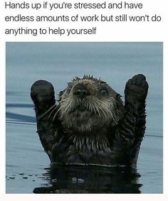 Funny pictures about You Otter Surrender. Oh, and cool pics about You Otter Surrender. Also, You Otter Surrender photos. The Animals, Baby Animals, Funny Animals, Animal Memes, Otters Funny, Baby Giraffes, Water Animals, Animal Facts, Cutest Animals