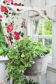 Put your flowers or crawling greens in a galvanized tub! Much more appealing than the plastic pots! Dream Garden, Garden Art, Home And Garden, Garden Design, Pot Plante, Plastic Pots, My Secret Garden, Hanging Baskets, Hanging Plant