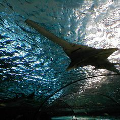 Ripley's Aquarium Myrtle Beach is one of the best things to do in Myrtle Beach, SC