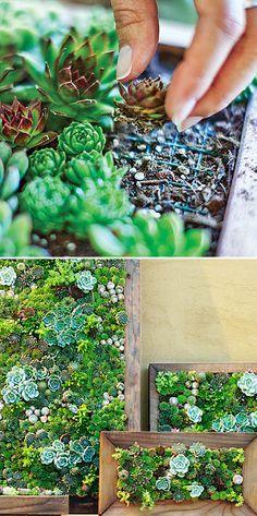 Vertikale Gärten Bauanleitung vertikal garten bauanleitung diy und selbermachen