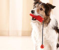 Zum #Werfen, Zerren und Kauen! #Hunde-Motivationsstick für €8,95 bei #Tchibo