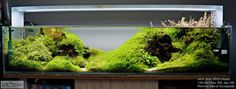 DS Team Aquascaping - Timeline