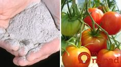 Dajte do pôdy trochu dreveného popola: Neuveríte, aký vplyv to môže mať na úrodu!