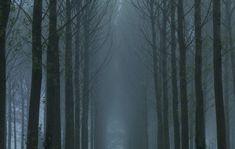woodsmystery5