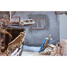 .@chagaundal   #snap #dog #pet 요즘, 인스타그램에서 내가 팔로잉하고 있는 분들의 #반려동물 ...   2013 12 10 /