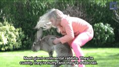 They're giant continental rabbits, and they're just freaking huge. They make excellent pets! Zoo Animals, Animals For Kids, Animals And Pets, Funny Animals, Cute Animals, Animal Antics, Animal Memes, Giant Rabbit, Giant Bunny