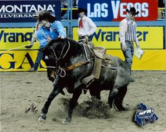 Tuf Cooper Calf Roper | ... and Tuf Cooper were the high money winner's in the Calf Roping at the