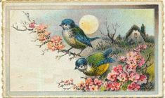 Sooo, did March come in like a lion or a lamb where you live? It came in like a lion here in San Diego. Vintage Moon, Vintage Birds, Vintage Paper, Vintage Images, Spring Images, Spring Birds, Vintage Labels, Printable Art, Printables