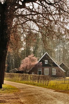 Old farmhouse, Spring, Haaksbergen, Twente, the Netherlands (By: harry eppink)