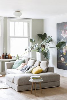 Great gray couch and jumbo plant