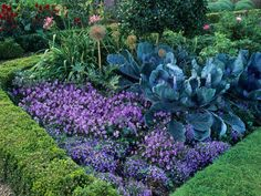 Mix edibles and ornamentals together in the garden for an English garden style. Varieties such as ornamental kales and cabbages mix well with colorful perrenials or herbs.