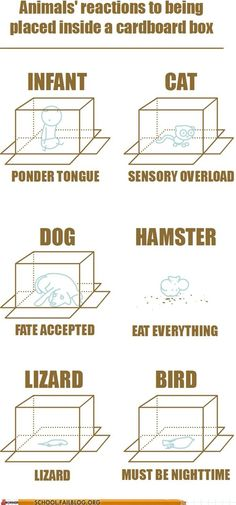 .animals reactions to being placed inside a cardboard box